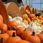 gourds-949112_1920